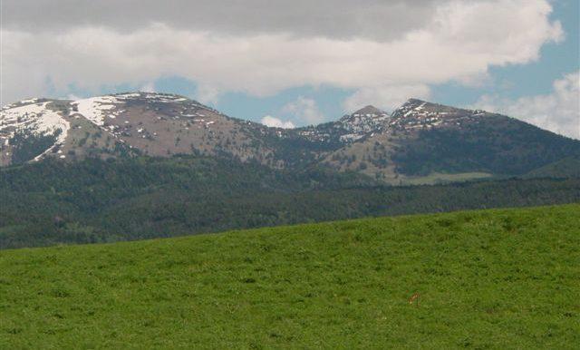 Snowcrest Rch. Summer 06 022